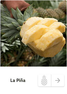 Banano Sabrostar | La Pina