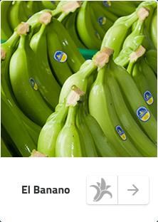 Banano Sabrostar | Banano
